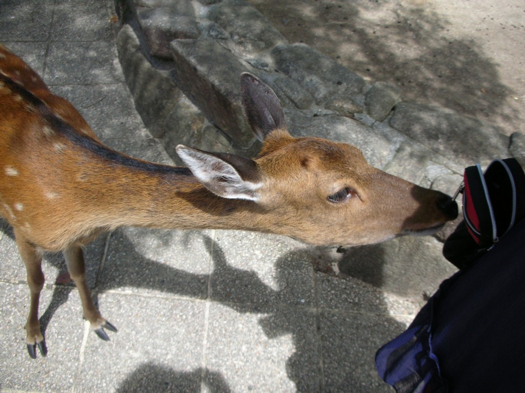 Pickpocket Deer